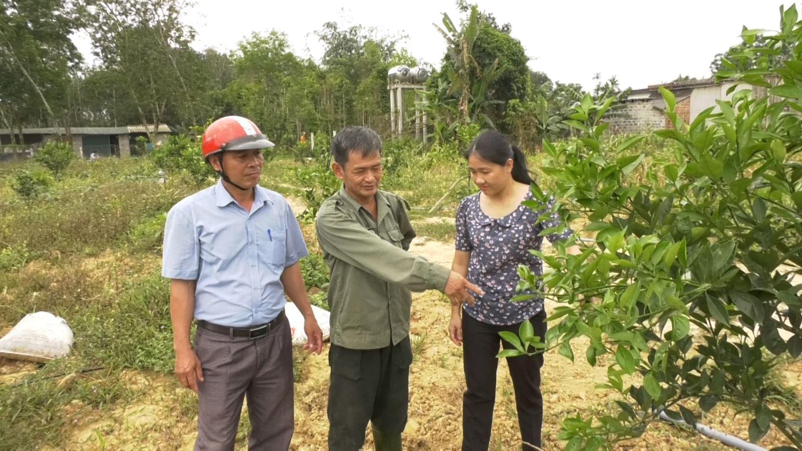 Mô hình trồng cam của anh Nguyễn Đăng Khoa