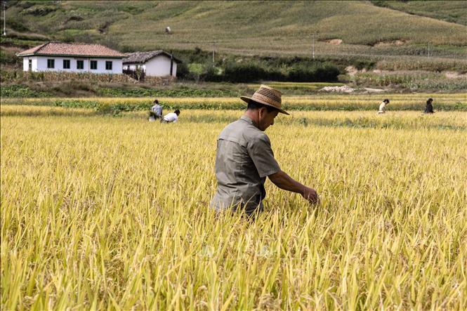 Trang nông nghiệp(16-01-2018)